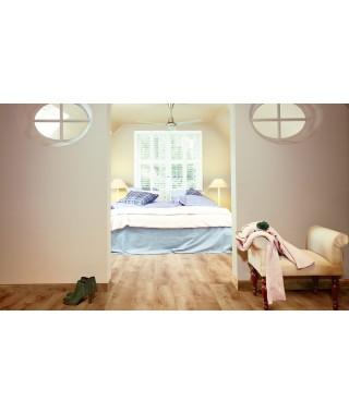 60797 chêne couché de soleil