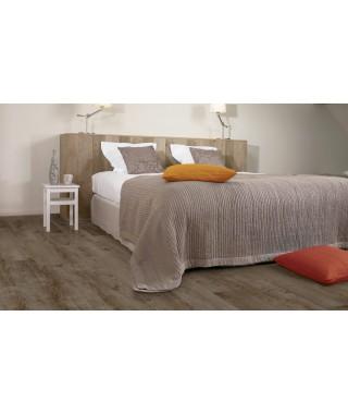 60749 Vieux chêne gris